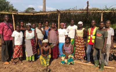 Implication des femmes comme main d'œuvre dans la mise en place des pépinières d'agroforesterie