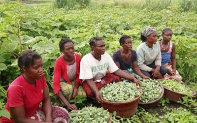 Récolte d'un groupement de femme de la coopérative LR ROCHER dans le cadre de la création d'activités génératrices de revenus